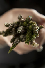 A caucasian hand holding out fresh asparagus