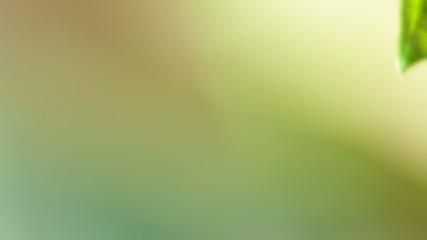 Detail of green Cannabis leaf.