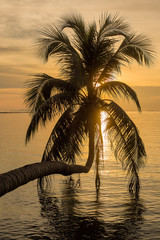 Coconut palm tree silhouette at sunset. Koh Phangan, Thailand