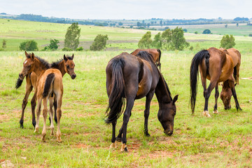 Horses, South Africa. November 2014.