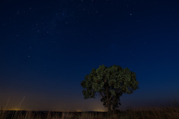 Star scape with lone tree brown grass and Milky Way soft light