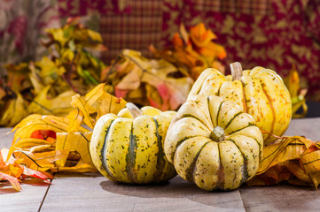 Fall squash with autumn leaves