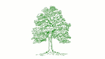 green tree hand draw