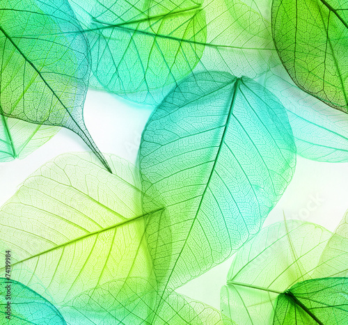 Plakat Macro leaves seamless texture
