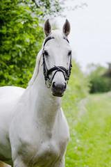 Pferd im Portrait
