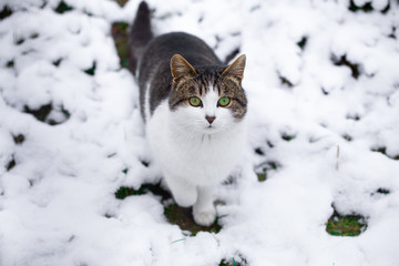 Cat on the snow