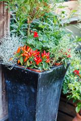 flowers outdoor