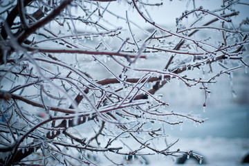 Зима, лёд