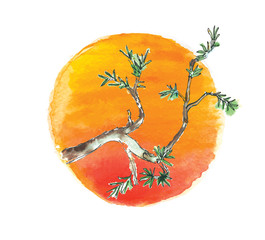 Branch of juniper tree against the sun, vector
