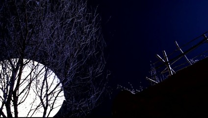 Full Moon Tree Branches Close Up
