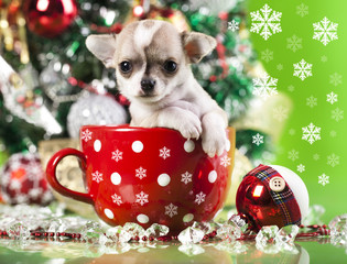 puppy christmas chihuahua in  cup