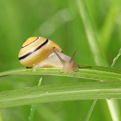 escargot jaune sur une feuille