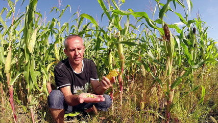 Successful Agriculturist in Front of His Corn Field