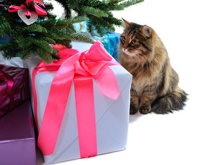 gift boxes and cat