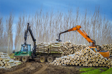 cranes for logs and woodpiles