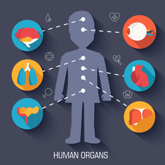 flat human organs icons illustration concept. Vector background