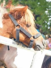 Horse - Retro filter