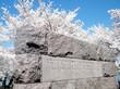 Washington Cherry Blossoms near Franklin Roosevelt Memorial 2010