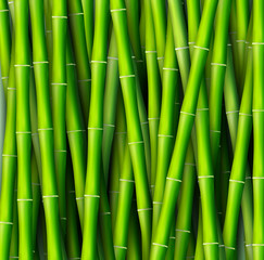 Bamboo  background concept. Vector illustration