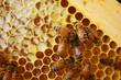 Obrazy na płótnie, fototapety, zdjęcia, fotoobrazy drukowane : Honey Bees in their Hives