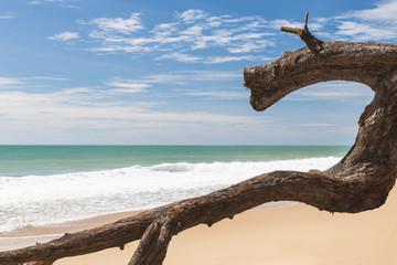 Weird log on the beach