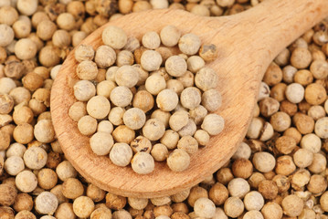 close up white pepper  and wooden spoon as background