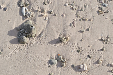 Textures in the sand on Kwajalein Marshall Islands