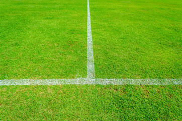Green soccer field with white line