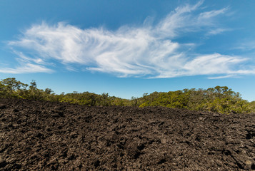 lava field on Rangitoto Island