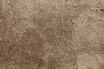 background from leaves of pale brown color