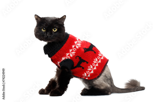 Papiers peints Porter black cat wearing in a red Christmas cardigan