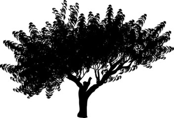 black tree with large crown
