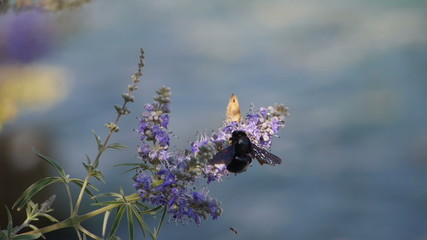 bees on flower at beach
