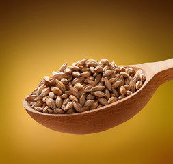 Barley in a wooden spoon