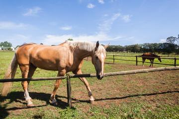 Horse Equestrian Animal