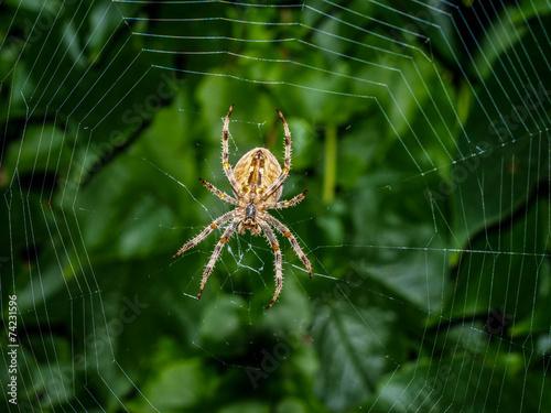 Leinwanddruck Bild Spider