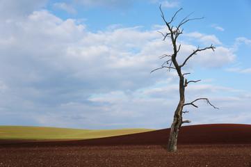 Monokultur mit totem Baum