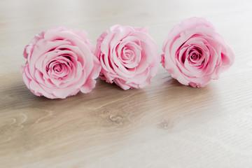 Pinke Rosenköpfe