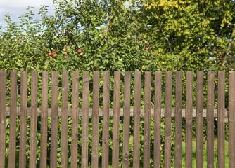 Apple garden.