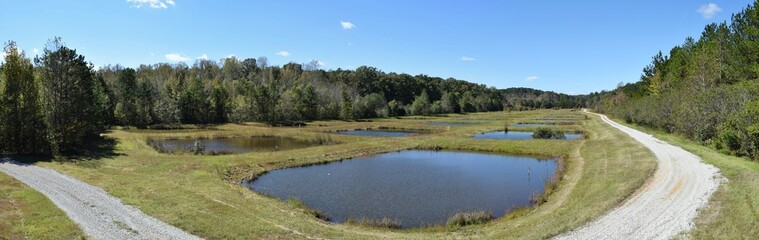 Ponds at the University of Mississippi Field Station