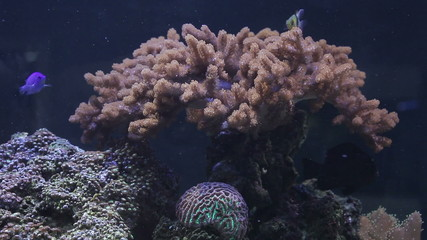 Landscape with tropical fishes and corals