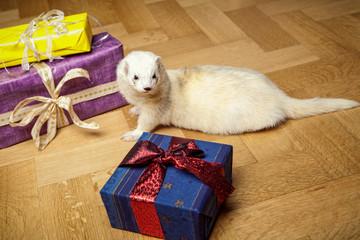 Frettchen sucht Geschenke
