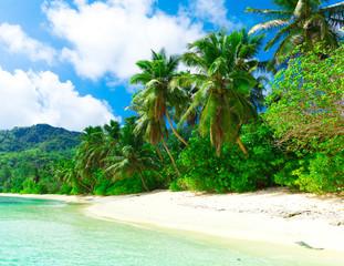 Sea Dream Palms