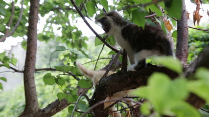 two kitten play on tree