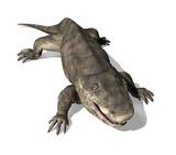 Eryops - Prehistoric Amphibian 2 poster