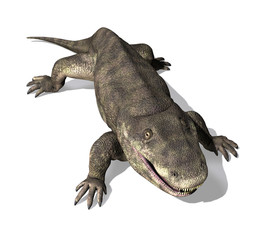 Eryops - Prehistoric Amphibian 2