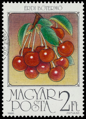 Stamp printed by Hungary shows Sour cherries
