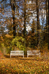 Wooden benches in the park