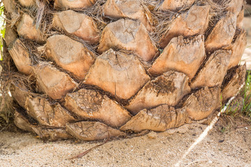 palm tree trunk background