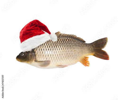 Foto op Plexiglas Vis Karpfen mit Weihnachtsmütze